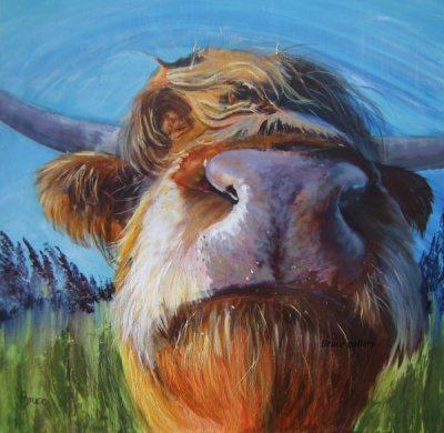 highland cow picture, the Bruce Gallery